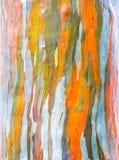 Ζωηρόχρωμος φλοιός του δέντρου Στοκ Φωτογραφία
