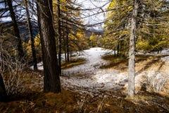 Ζωηρόχρωμος χιονώδης δασικός δρόμος στο πρόωρο χειμερινό δάσος Στοκ εικόνες με δικαίωμα ελεύθερης χρήσης