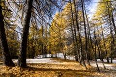 Ζωηρόχρωμος χιονώδης δασικός δρόμος στο πρόωρο χειμερινό δάσος Στοκ Εικόνα