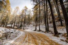 Ζωηρόχρωμος χιονώδης δασικός δρόμος στο πρόωρο χειμερινό δάσος Στοκ φωτογραφία με δικαίωμα ελεύθερης χρήσης