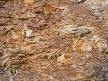 Ζωηρόχρωμος gneiss βράχος - γραφικά υπόβαθρο/σχέδιο Στοκ Φωτογραφίες
