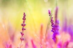 Ζωηρόχρωμο άγριο υπόβαθρο λουλουδιών Στοκ εικόνα με δικαίωμα ελεύθερης χρήσης