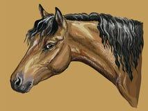 Ζωηρόχρωμο άλογο πορτρέτο-1 σχεδίων χεριών διανυσματική απεικόνιση