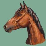 Ζωηρόχρωμο άλογο πορτρέτο-6 σχεδίων χεριών απεικόνιση αποθεμάτων