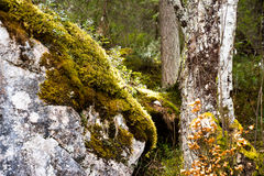 Ζωηρόχρωμο δάσος με τις ηλιαχτίδες Στοκ Εικόνα