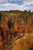 Ζωηρόχρωμο δάσος το φθινόπωρο με τον ποταμό από την Αυστρία Στοκ Εικόνα