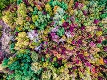 ζωηρόχρωμο δάσος φθινοπώρου στοκ φωτογραφίες