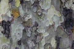 ζωηρόχρωμο δάσος Στοκ Φωτογραφία