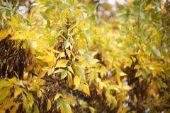 ζωηρόχρωμο δέντρο φύλλων φθινοπώρου Στοκ Εικόνες