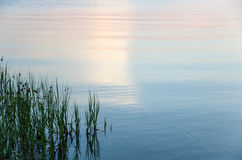 Ζωηρόχρωμο λαμπυρίζοντας νερό με την πράσινη χλόη Στοκ Εικόνες