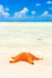 Ζωηρόχρωμο αστέρι θάλασσας στην ακτή μιας τυρκουάζ θάλασσας Στοκ φωτογραφία με δικαίωμα ελεύθερης χρήσης