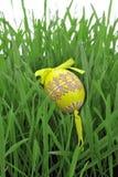 ζωηρόχρωμο αυγό Πάσχας πο&ups Στοκ Εικόνες