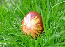 Ζωηρόχρωμο αυγό Πάσχας στη χλόη Στοκ Φωτογραφίες