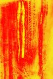 Ζωηρόχρωμο αφηρημένο μικρογράφημα των κυττάρων ξυλημάτων στο λουλούδι ragwort Στοκ φωτογραφία με δικαίωμα ελεύθερης χρήσης