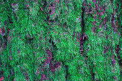 Ζωηρόχρωμο βρύο στον κορμό δέντρων Φωτογραφία που απεικονίζει μια μακρο άποψη Στοκ εικόνα με δικαίωμα ελεύθερης χρήσης