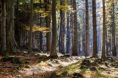 Ζωηρόχρωμο δάσος φθινοπώρου με τη θαυμάσια ηλιοφάνεια Στοκ εικόνα με δικαίωμα ελεύθερης χρήσης