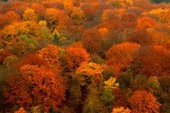 ζωηρόχρωμο δάσος Στοκ εικόνα με δικαίωμα ελεύθερης χρήσης