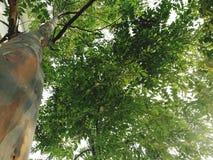 Ζωηρόχρωμο δέντρο στη φύση Στοκ εικόνες με δικαίωμα ελεύθερης χρήσης