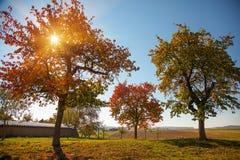 Ζωηρόχρωμο δέντρο στον τομέα και το φως του ήλιου φθινοπώρου στοκ εικόνα