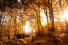 ζωηρόχρωμο δασικό τοπίο φύλλων φθινοπώρου Στοκ Εικόνα