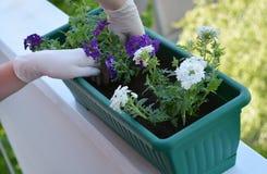 ζωηρόχρωμο δοχείο λουλ Στοκ εικόνες με δικαίωμα ελεύθερης χρήσης