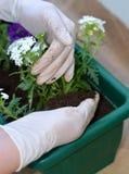 ζωηρόχρωμο δοχείο λουλ Στοκ φωτογραφία με δικαίωμα ελεύθερης χρήσης