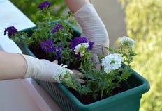 ζωηρόχρωμο δοχείο λουλ στοκ φωτογραφίες