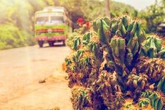 Ζωηρόχρωμο λεωφορείο και πράσινος κάκτος Στοκ εικόνες με δικαίωμα ελεύθερης χρήσης