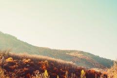 Ζωηρόχρωμο ηλιοβασίλεμα βουνοπλαγιών φθινοπώρου δασικό Στοκ Φωτογραφίες