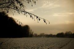Ζωηρόχρωμο ηλιοβασίλεμα σε έναν χιονώδη τομέα με τα δέντρα στα ευρωπαϊκά όρη μια κρύα ημέρα το χειμώνα στοκ φωτογραφία