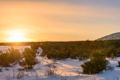 Ζωηρόχρωμο ηλιοβασίλεμα στο όμορφο πεύκο δασική Ρωσία, Stary Krym Στοκ εικόνες με δικαίωμα ελεύθερης χρήσης