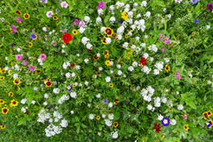 Ζωηρόχρωμο λιβάδι λουλουδιών Στοκ Φωτογραφία