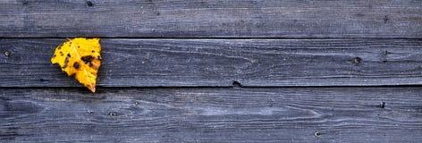 Ζωηρόχρωμο κίτρινο πεσμένο φύλλο φθινοπώρου στο ξύλινο γκρίζο υπόβαθρο Στοκ Φωτογραφίες