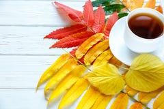 Ζωηρόχρωμο κίτρινο, πορτοκαλί και κόκκινο φύλλα φθινοπώρου και φλιτζάνι του καφέ ή καυτό τσάι στο άσπρο ξύλινο υπόβαθρο εποχή αλλ στοκ εικόνες