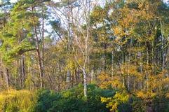 Ζωηρόχρωμο κίτρινο φύλλωμα φθινοπώρου Στοκ Εικόνες