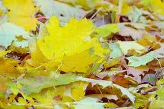 Ζωηρόχρωμο και φωτεινό υπόβαθρο φιαγμένο από πεσμένα φύλλα φθινοπώρου Στοκ Φωτογραφία