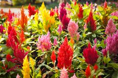 Ζωηρόχρωμο καλοκαίρι λουλουδιών Στοκ φωτογραφίες με δικαίωμα ελεύθερης χρήσης
