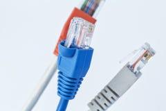 Ζωηρόχρωμο καλώδιο δικτύων με RJ45 τους συνδετήρες στοκ φωτογραφία