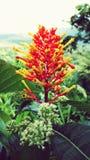 Ζωηρόχρωμο κεφάλι λουλουδιών του κολομβιανού τροπικού δάσους Στοκ Φωτογραφίες