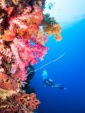 ζωηρόχρωμο κοράλλι Στοκ φωτογραφία με δικαίωμα ελεύθερης χρήσης