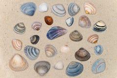 Ζωηρόχρωμο κοχύλι στην παραλία Στοκ Εικόνες
