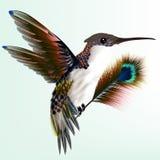 Ζωηρόχρωμο κολίβριο με το φτερό peacock Στοκ Φωτογραφία