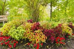 Ζωηρόχρωμο κρεβάτι λουλουδιών πάρκων Στοκ Εικόνες