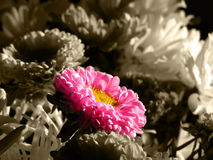 ζωηρόχρωμο λουλούδι ανθοδεσμών ενιαίο Στοκ Φωτογραφία
