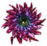 ζωηρόχρωμο λουλούδι Στοκ Εικόνα