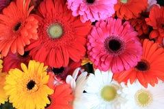 Ζωηρόχρωμο μίγμα λουλουδιών Στοκ Φωτογραφία