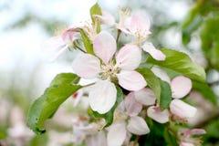 Ζωηρόχρωμο λουλούδι άνοιξη Στοκ Εικόνες