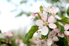 Ζωηρόχρωμο λουλούδι άνοιξη Στοκ εικόνα με δικαίωμα ελεύθερης χρήσης