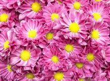ζωηρόχρωμο λουλούδι αν&alpha Στοκ φωτογραφία με δικαίωμα ελεύθερης χρήσης