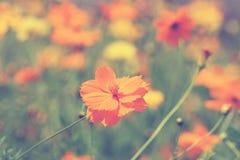 Ζωηρόχρωμο λουλούδι κόσμου με φιλτραρισμένη την τρύγος επίδραση Στοκ Φωτογραφία